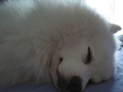 Llsleep